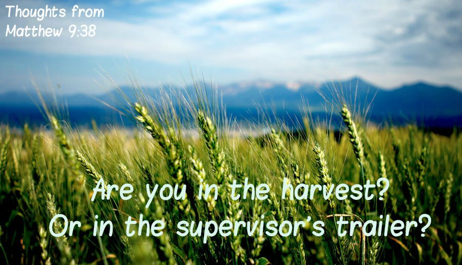 Ask the Lord of the harvest, therefore, to send out workers into his harvest field