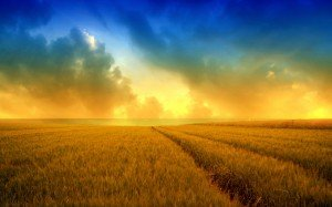 SummerWallpaper-